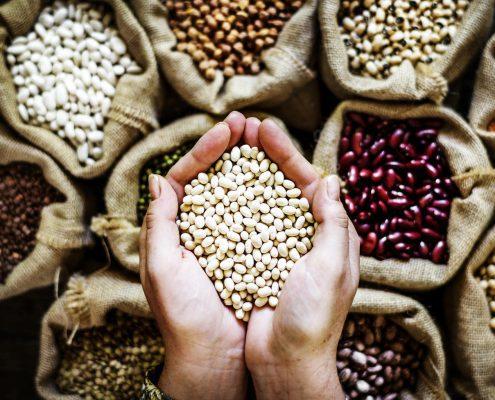 produção de alimentos