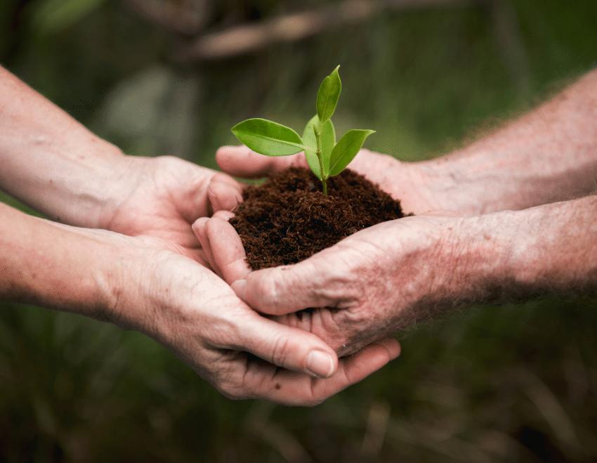 Sustentabilidade – O que é ser sustentável?